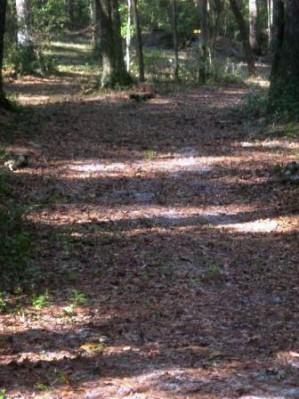 Spirit of the Suwannee, Magnolia, Hole 16 Short tee pad