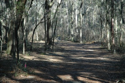 Spirit of the Suwannee, Magnolia, Hole 15 Long approach