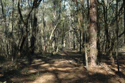 Spirit of the Suwannee, Magnolia, Hole 13 Tee pad