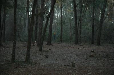 Spirit of the Suwannee, Magnolia, Hole 7 Short approach