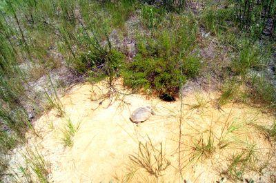 Ocala Greenway, Main course, Hole 21