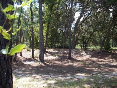 Ocala Greenway, Main course, Hole 3 Midrange approach
