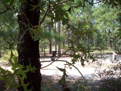 Ocala Greenway, Main course, Hole 1 Short tee pad