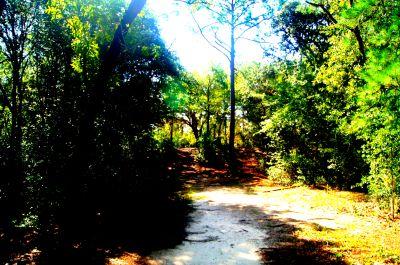 Ocala Greenway, Main course, Hole 6 Tee pad