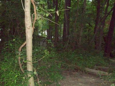 Valley Farm Park, Main course, Hole 8 Long tee pad