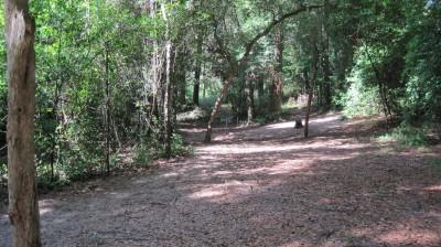 Tom Brown Park, Main course, Hole 12 Short approach