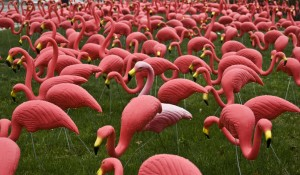 Anglo American and PDGC presents The Pink Flamingo graphic