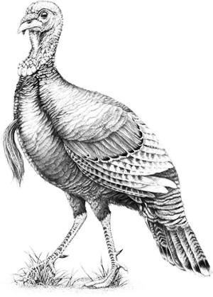 Wild Turkey Doubles graphic