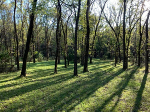 Shawnee Trails 2020 graphic