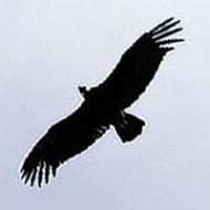 Borderland Buzzards logo