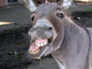 DFL Donkey Bag Tag League logo